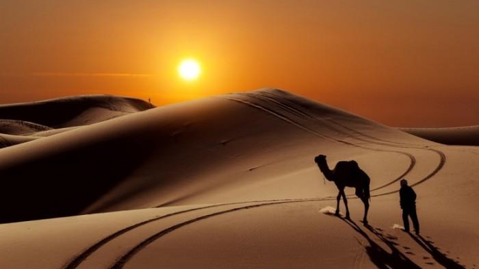 camel-desert-5447ac3e398b8
